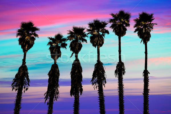 Californie coucher du soleil palmiers ouest côte surf Photo stock © lunamarina