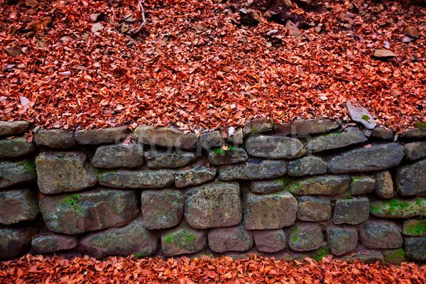 Outono floresta Espanha cair natureza montanha Foto stock © lunamarina