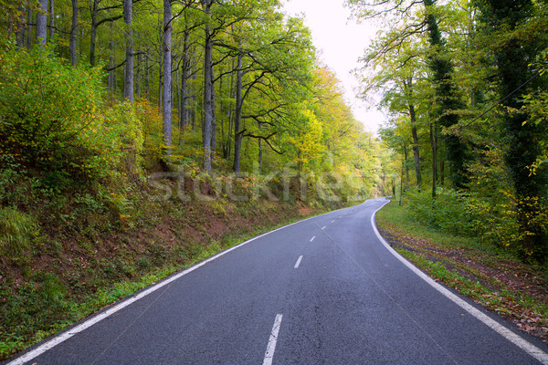 Pyrenees curve road in forest Stock photo © lunamarina