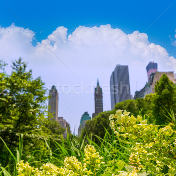 セントラル·パーク 花 マンハッタン ニューヨーク 空 春 ストックフォト © lunamarina