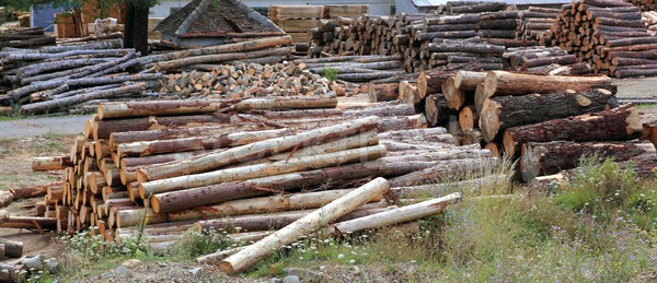 Logs timber industry trunks stacked outdoor Stock photo © lunamarina