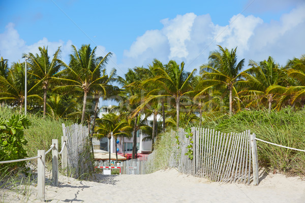 Miami tengerpart bejárat pálmafák Florida USA Stock fotó © lunamarina