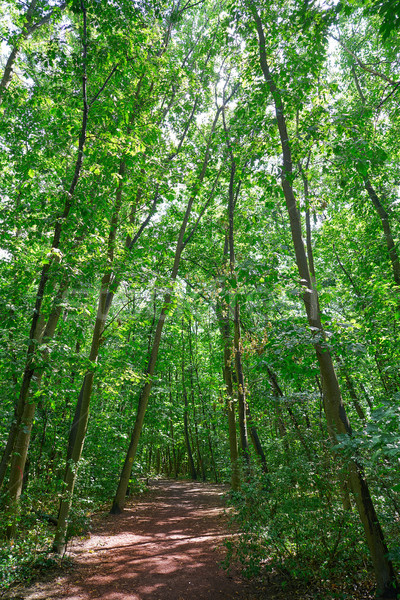 Unesco doğal park Almanya ahşap orman Stok fotoğraf © lunamarina