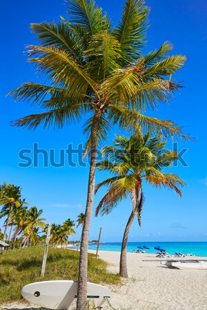 Caribbean North beach palm trees Isla Mujeres Mexico Stock photo © lunamarina
