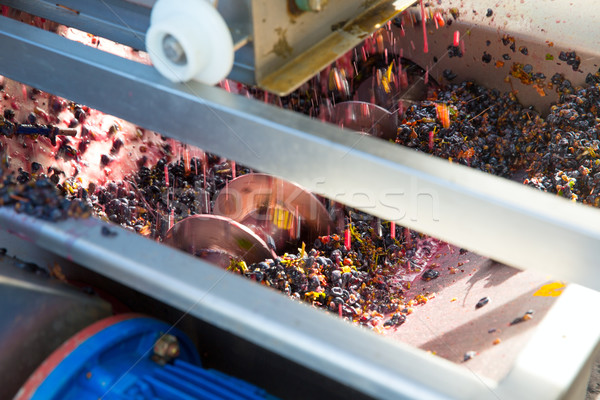 corkscrew crusher destemmer vinemaking with grapes Stock photo © lunamarina