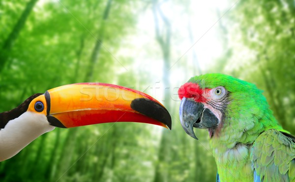 Toco toucan and Military Macaw Green parrot Stock photo © lunamarina