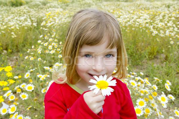 Loiro little girl margarida flor da primavera prado campo Foto stock © lunamarina