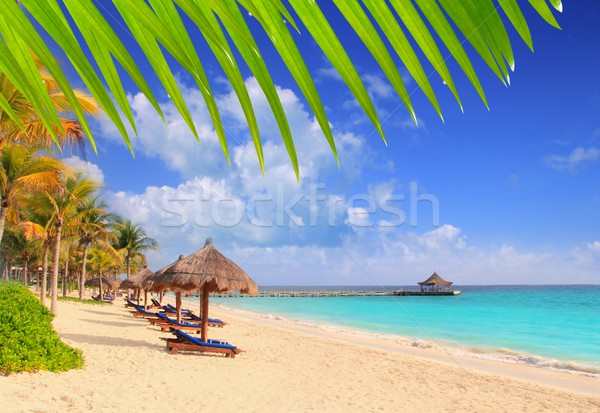 Mayan Riviera beach palm trees sunroof Caribbean Stock photo © lunamarina