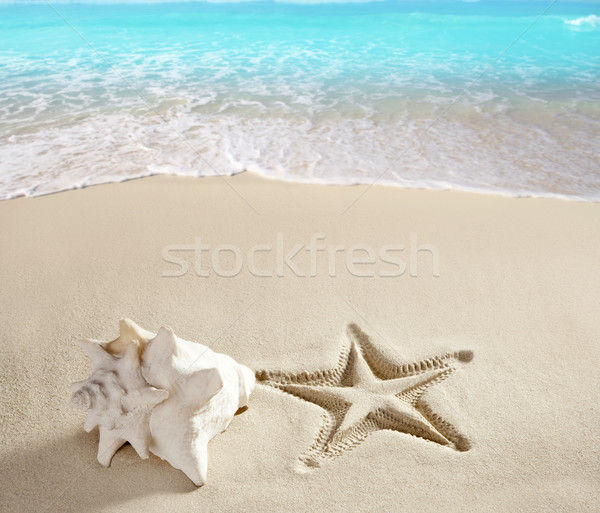 Photo stock: Caraïbes · plage · starfish · imprimer · shell · sable · blanc