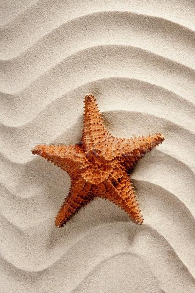 Foto stock: Praia · branco · ondulado · areia · starfish · férias · de · verão