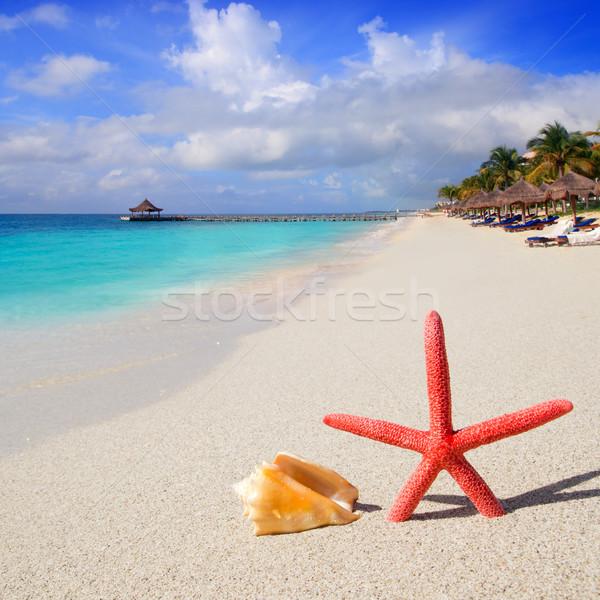 Foto stock: Praia · starfish · concha · areia · branca · tropical · cabana