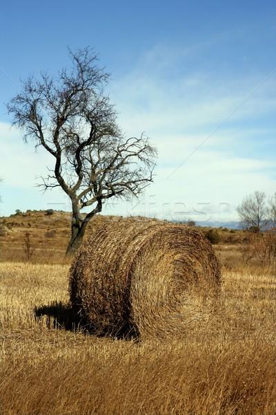 Yellow straw round bale in the fields, Spain Stock photo © lunamarina