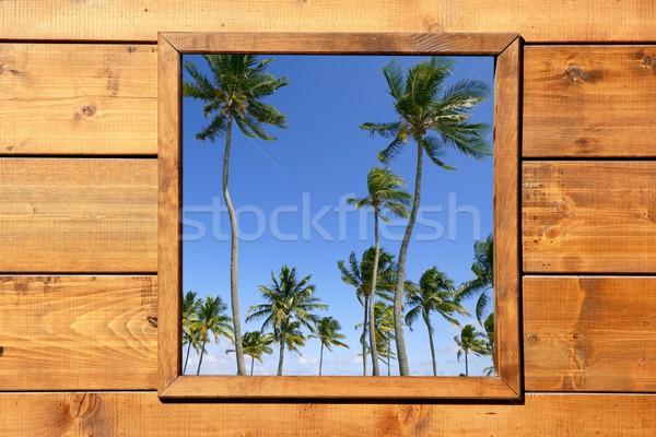 Tropikal palmiye ağaçları görmek ahşap pencere ev Stok fotoğraf © lunamarina