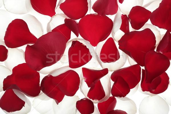 Coloré rose pétale modèle wallpaper texture Photo stock © lunamarina