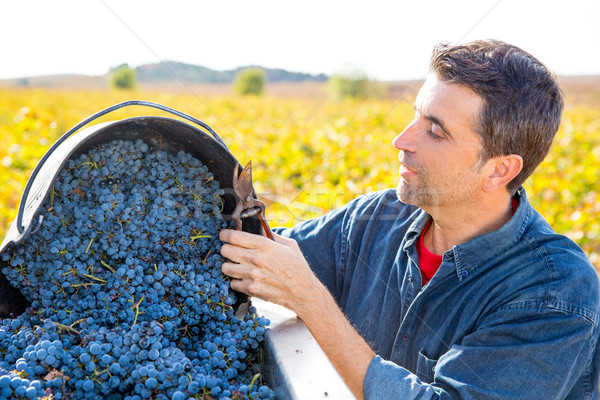 Mediterrán szőlőskert gazda aratás gazdálkodás szőlő Stock fotó © lunamarina