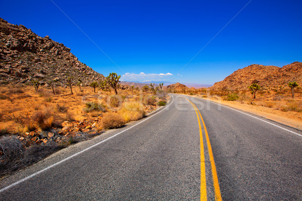 Joshua Tree boulevard Road in Yucca Valley desert California Stock photo © lunamarina