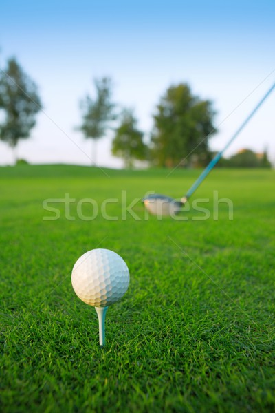 Golf tee ball club driver in green grass course Stock photo © lunamarina