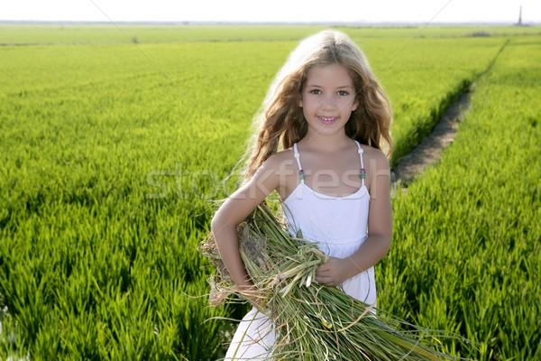 Stockfoto: Meisje · landbouwer · rijst · velden · groene · outdoor