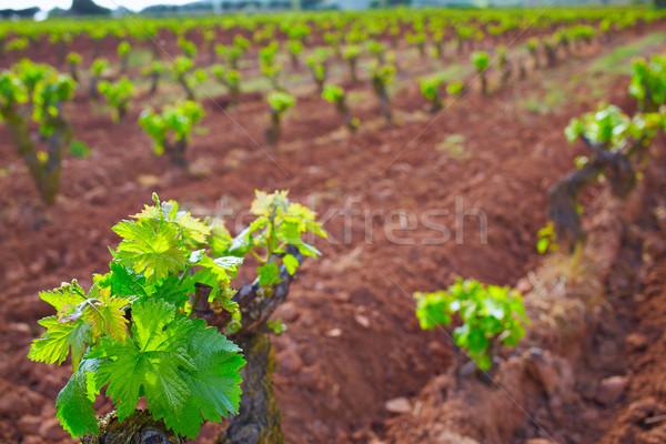 La vinha maneira campos paisagem Foto stock © lunamarina