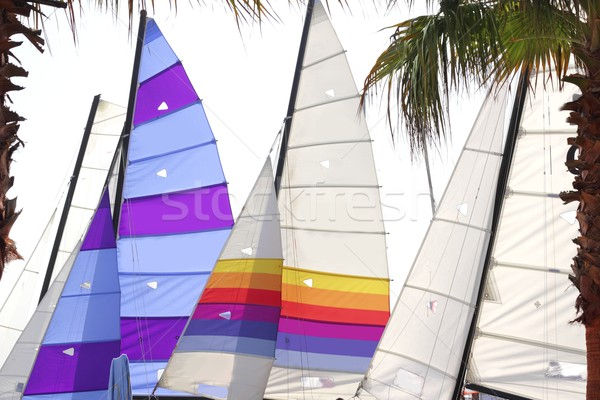 hoby hobby cat colorful sails palm tree leaf Stock photo © lunamarina