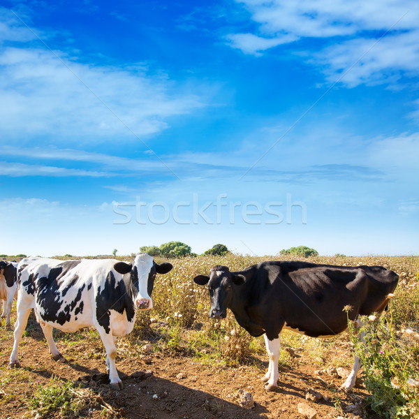 Vaches bovins alimentaire nature paysage fond Photo stock © lunamarina