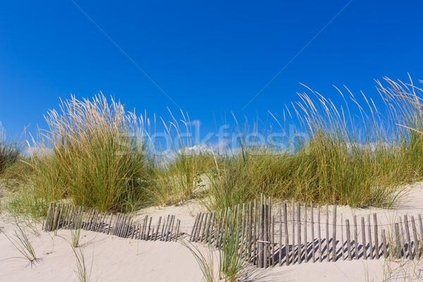 Alaior Cala Son Bou in Menorca dunes at Balearic Stock photo © lunamarina