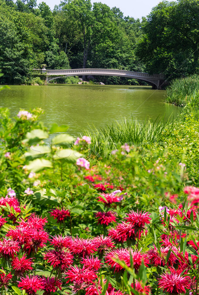 セントラル·パーク 湖 弓 橋 ニューヨーク 空 ストックフォト © lunamarina
