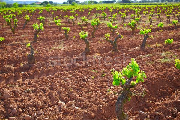 La Rioja vineyard in The Way of Saint James Stock photo © lunamarina