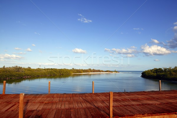 wooden bride over mangrove canal in mexico Stock photo © lunamarina