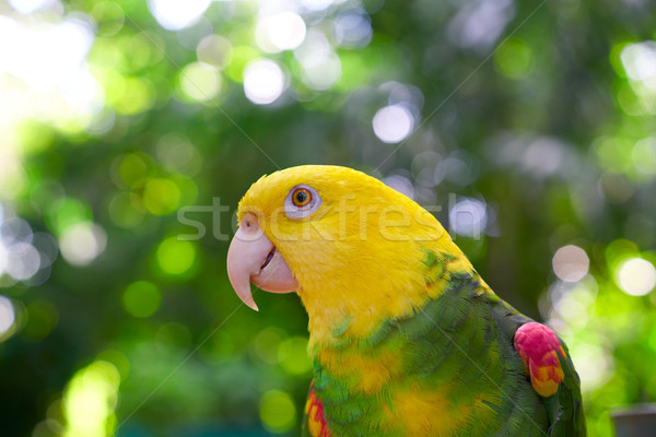 Amazon Papagei gelb zentrale america Sonne Stock foto © lunamarina