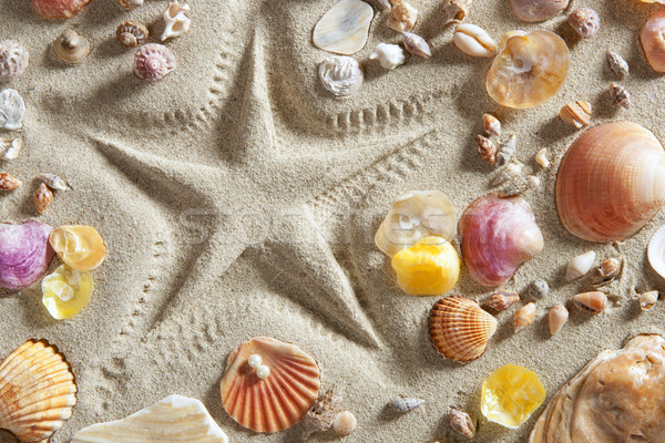 Photo stock: Plage · sable · blanc · starfish · imprimer · beaucoup · clam