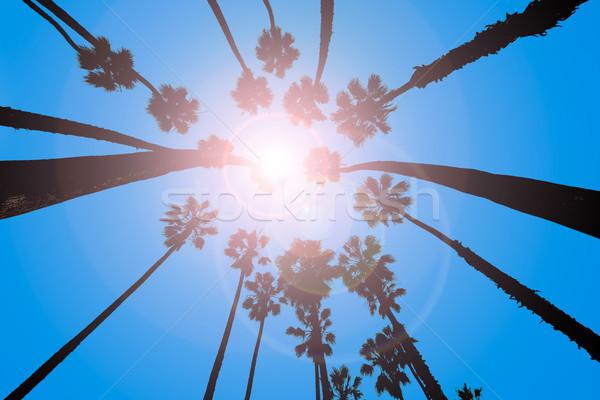 Califórnia palmeiras ver abaixo praia Foto stock © lunamarina