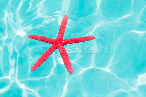 Red starfish floating on perfect tropical sea Stock photo © lunamarina