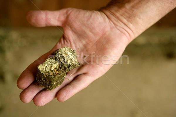 Human male hand with dry alfalfa, horses food, granary, barn. Stock photo © lunamarina