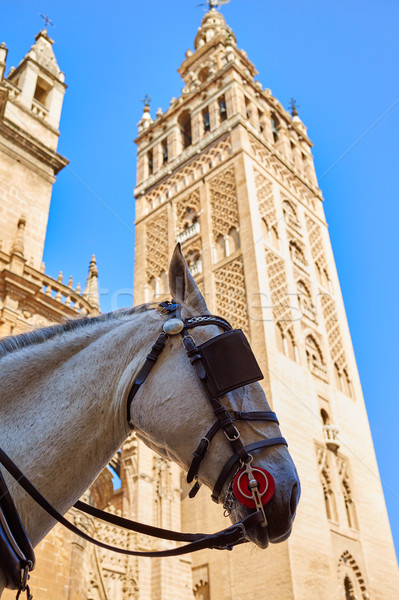 Catedral torre caballo cabeza edificio ciudad Foto stock © lunamarina