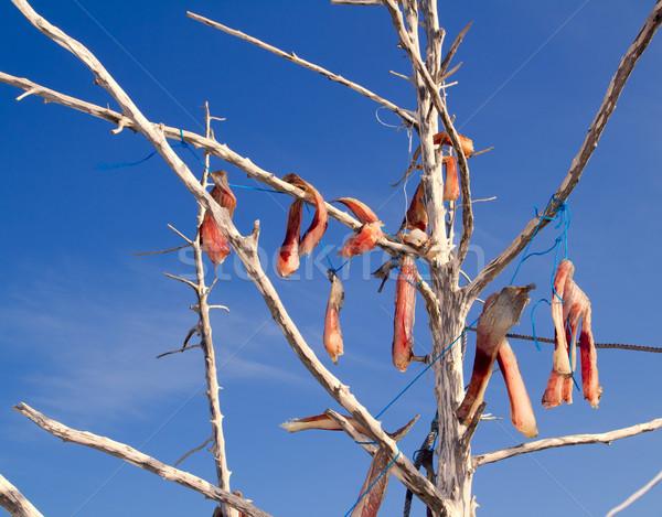 Sózott hal mediterrán stílus fa ágak Stock fotó © lunamarina