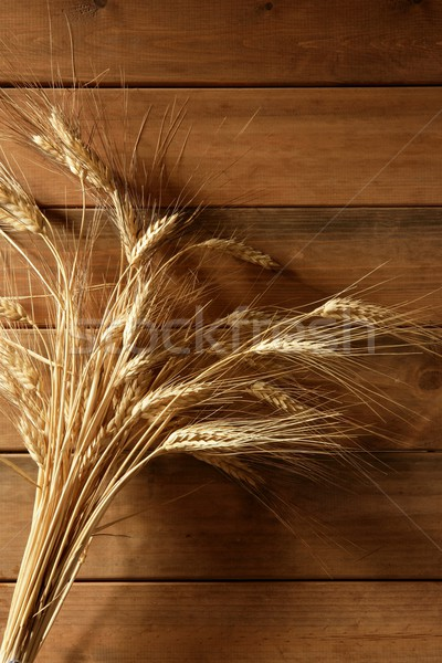 Ear golden wheat spike over wooden background  Stock photo © lunamarina