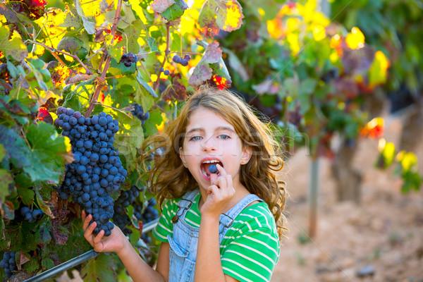 Gazda gyerek lány szőlőskert eszik szőlő Stock fotó © lunamarina