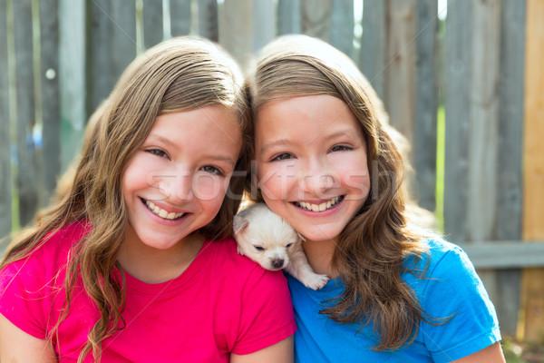 Iker nővérek kutyakölyök díszállat kutya játszik Stock fotó © lunamarina