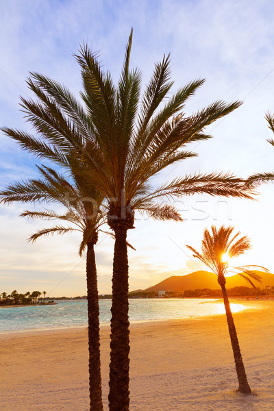 Alcudia Majorca at sunset on the beach Mallorca Stock photo © lunamarina