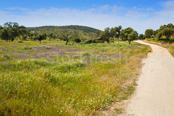 Stok fotoğraf: Yol · Santiago · İspanya · doğa · alan