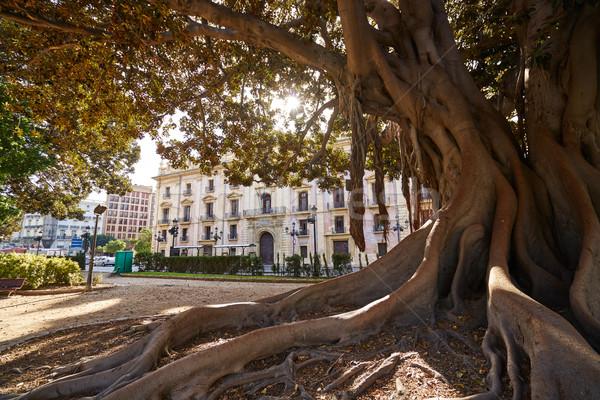 Valencia park nagy fa Spanyolország LA Stock fotó © lunamarina