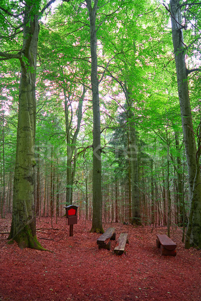 Harz mountains forest in Germany Stock photo © lunamarina