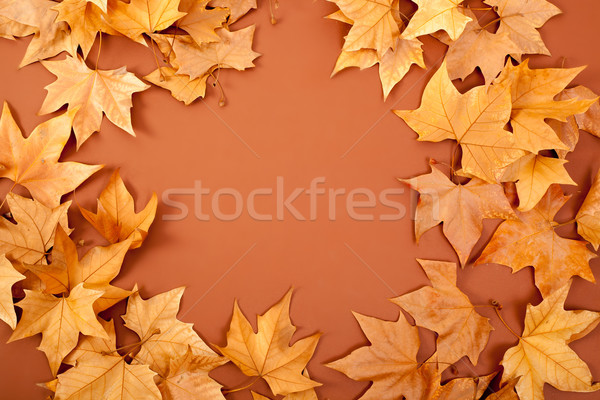 autumn fall dired leaves border fame on brown Stock photo © lunamarina