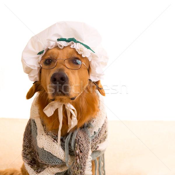 Lobo perro abuela golden retriever bebé pequeño Foto stock © lunamarina