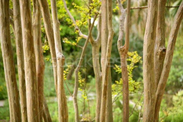 Stock photo: Dried trunk poles row with green trees