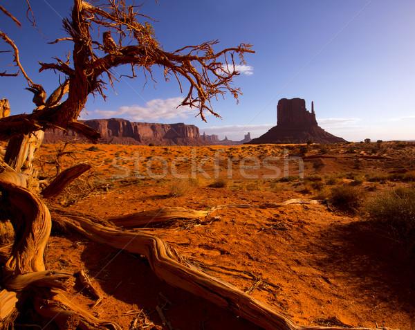 West ochtend Utah boom hemel Stockfoto © lunamarina