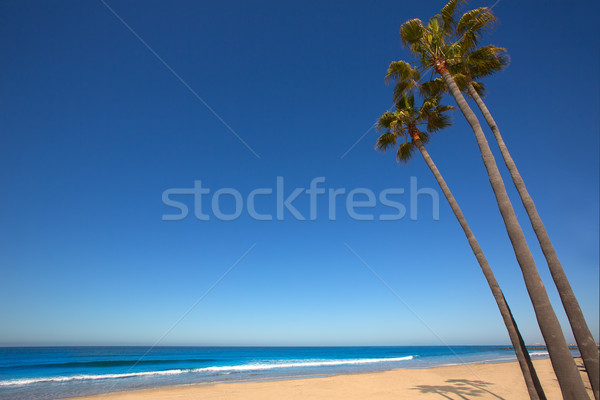 Plage Californie palmiers rive trois groupe Photo stock © lunamarina