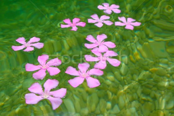 ピンク 花 自然 淡水 石 ストックフォト © lunamarina