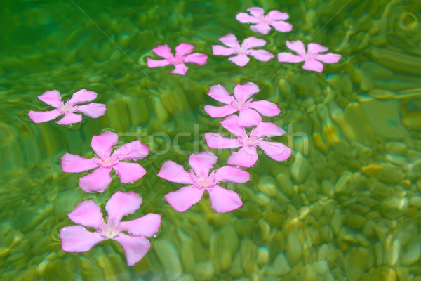 Rosa flores naturales de agua dulce piedra Foto stock © lunamarina